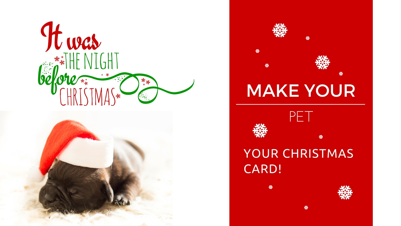 Christmas Cards with Pets