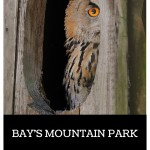 Bay's Mountain Raptor Tour Review