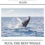 Orchestra Plays for Whales – They Come Dance