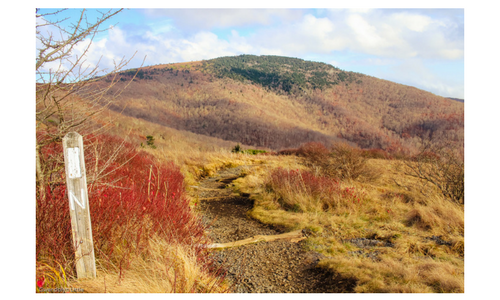 Roan Mountain hike from Carver's Gap