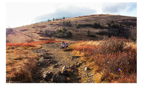 T examining the trail up on Roan Mountain.