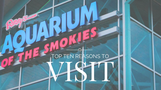 Top Ten Reasons To Visit The Aquarium