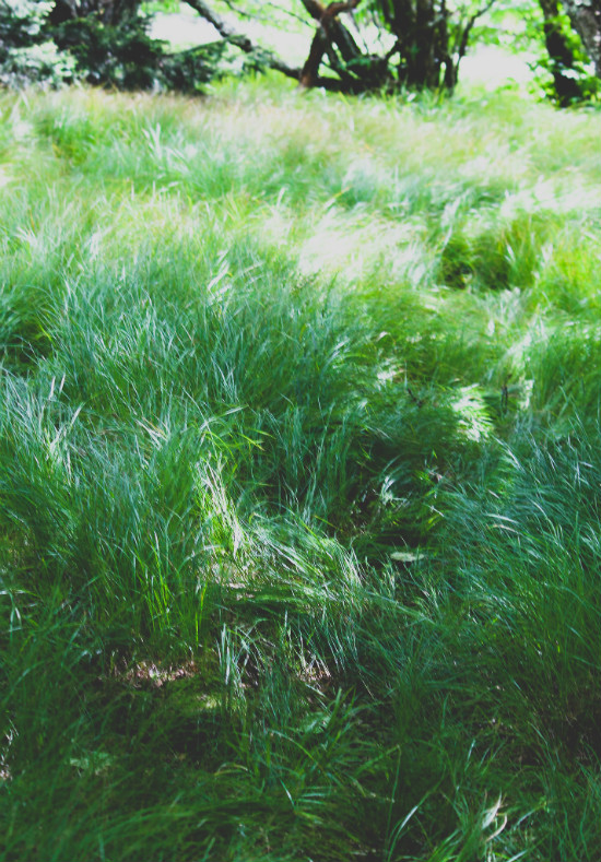 Grass On Roan Mountain
