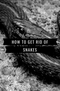 Get Rid of Snakes