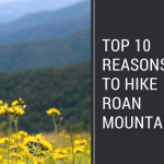 Ten Reasons Why You Should Hike Roan Mountain
