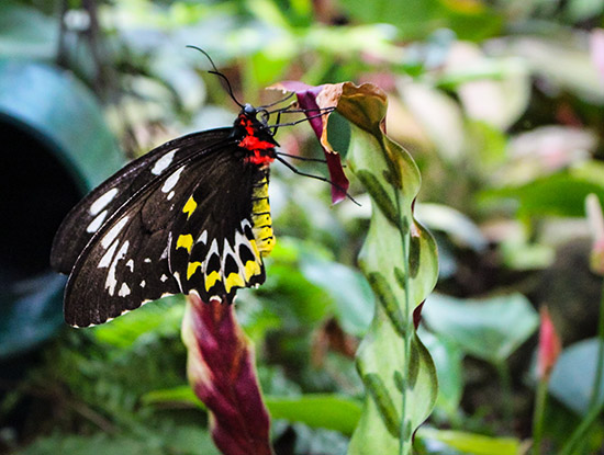 Butterfly at Key West Butterfly Conservatory