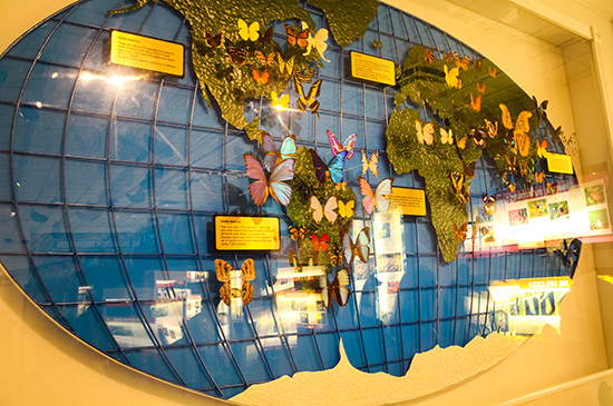 Butterflies from all around the world