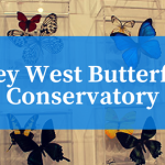Visit The Key West Butterfly Conservatory