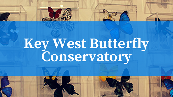 Key West Butterfly Conservatory Review
