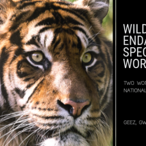 Wildlife and Endangered Species Worksheet