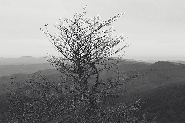My Tree on Roan Mountain