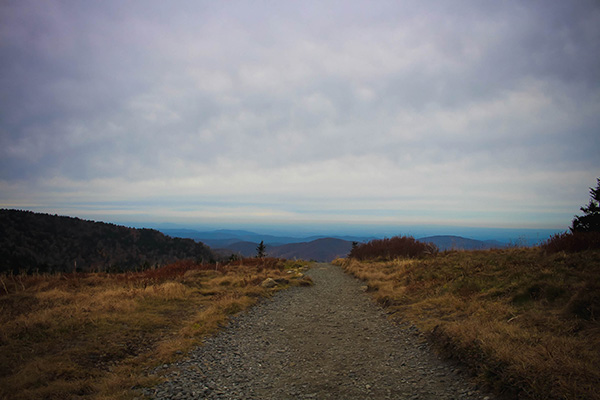 Trail on Roan Mountain