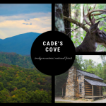 Visit Cade's Cove In The Great Smoky Mountains