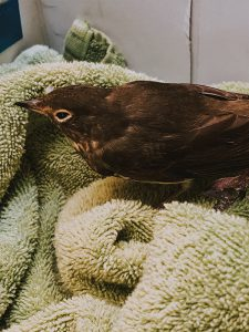Injured Bird We Rescued