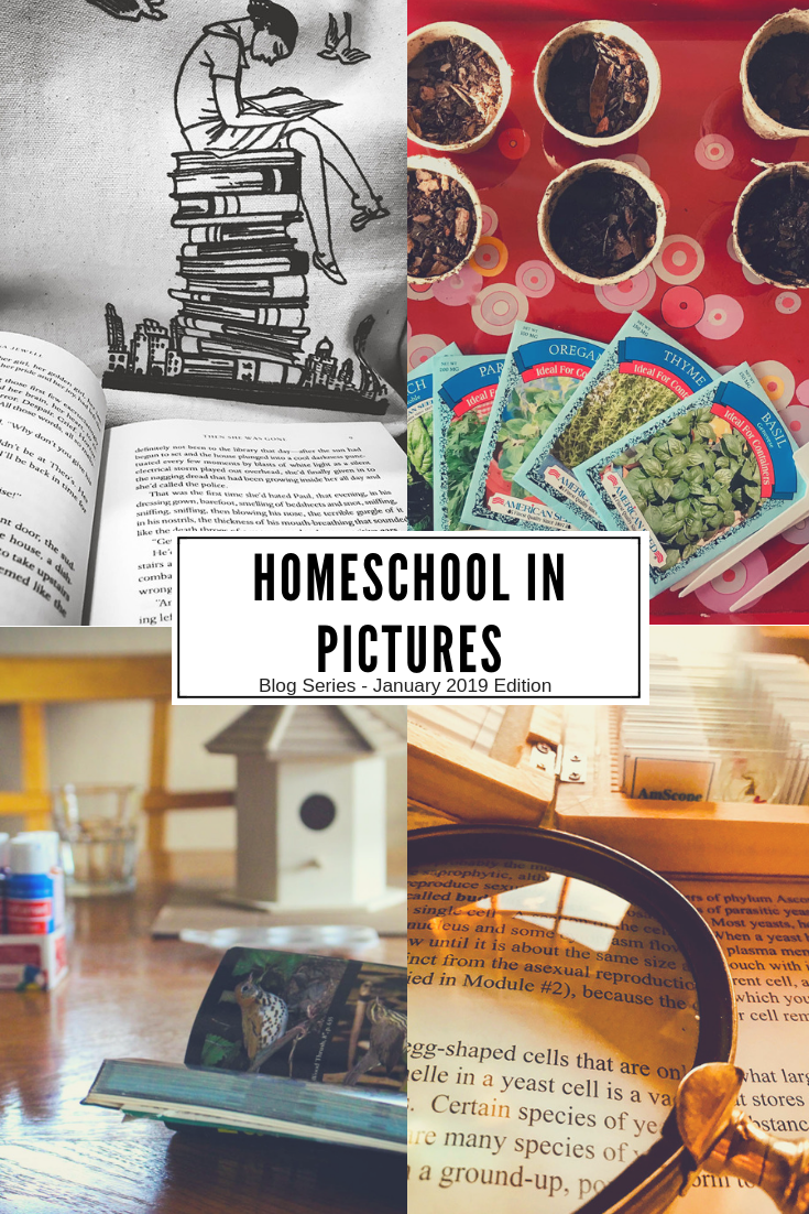 Homeschooling In Pictures Blog Series