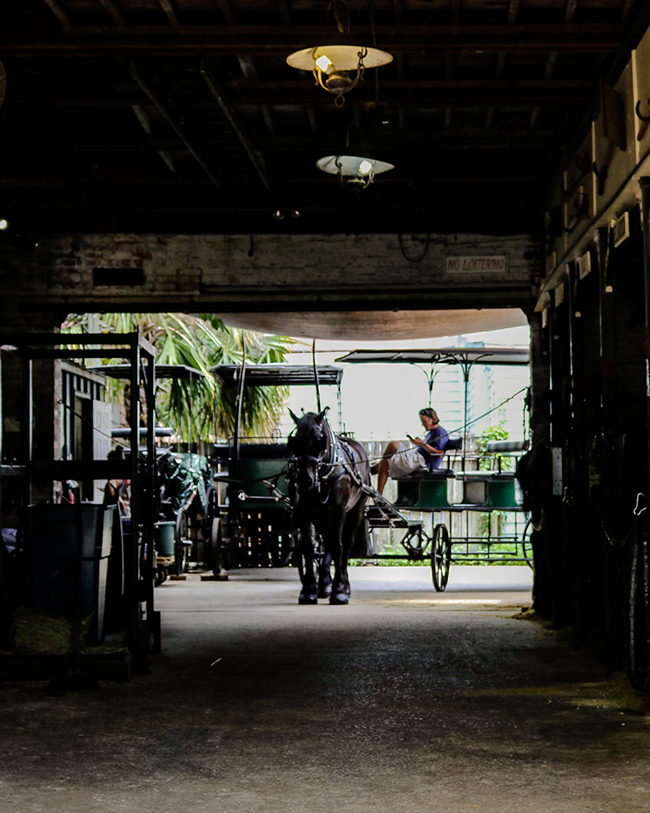 Horse Drawn Carriage Tours in Charleston, SC