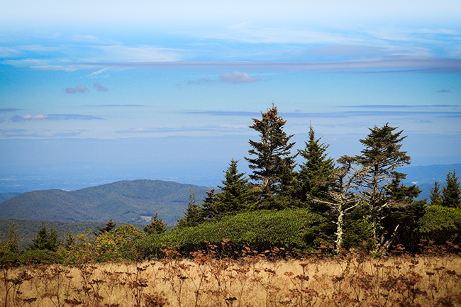Roan Mountain Landscape