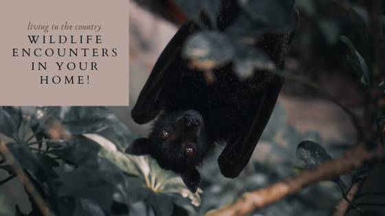 Wildlife encounters at home with bats, bears, snakes, raccon, skunks and more.