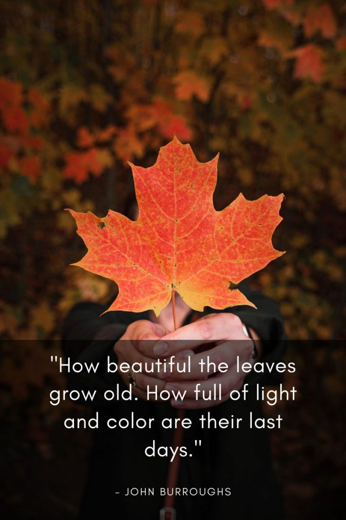 "Autumn Quotes and Sayings. Burroughs Quote, "" How beautiful the leaves grow old. How full of light and color are their last days."""