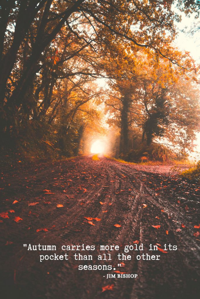 "Fall Quotes and Sayings. Jim Bishop Quote for Autumn. ""Autumn carried more gold in its pocket than all the other seasons."