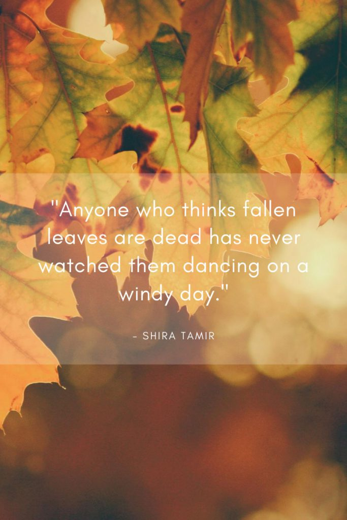 "fall leaves saying - Fall Quote by Shira Tamir, ""Anyone who thinkgs fallen leaves are dead has never watched them dancing on a windy day."""