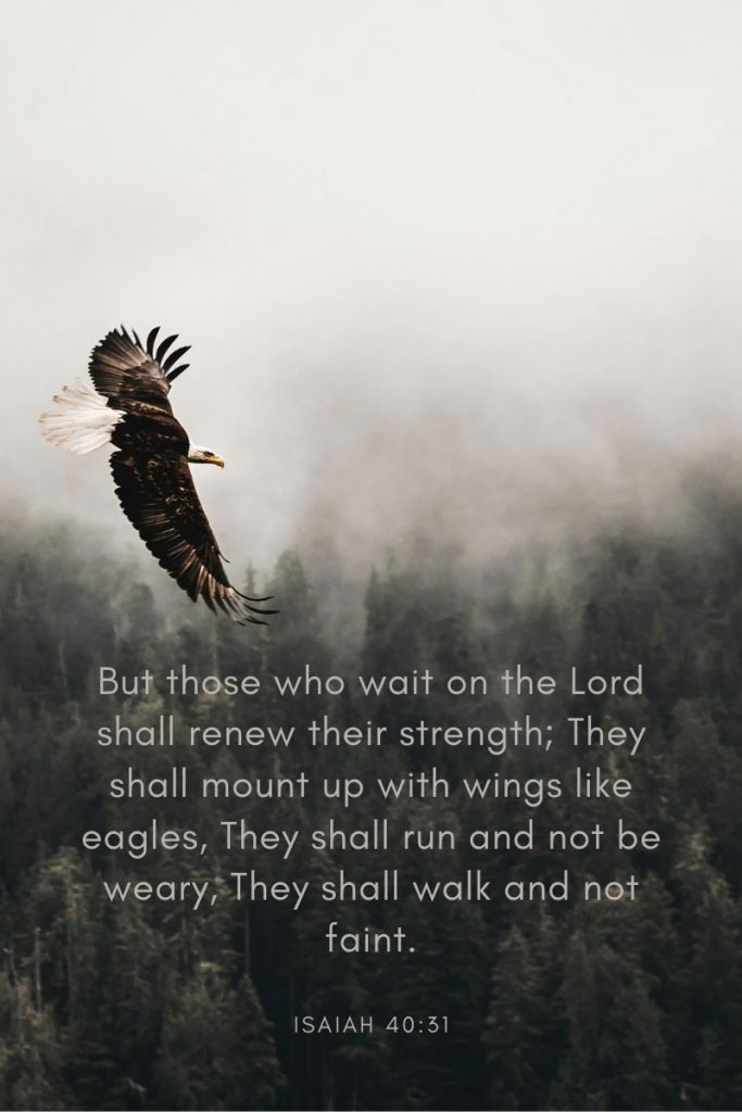 But those who wait on the Lord shall renew their strength; They shall mount up with wings like eagles, They shall run and not be weary, They shall walk and not faint.     ~ Isaiah 40:31