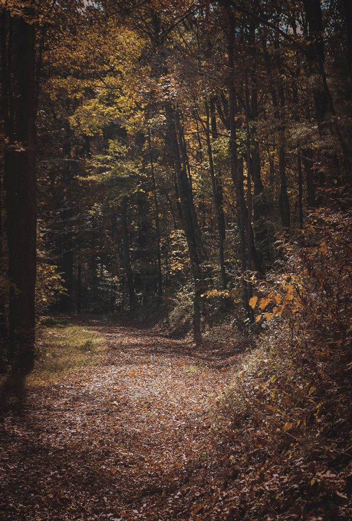 The Spillway Trail in Bristol, Tennessee.